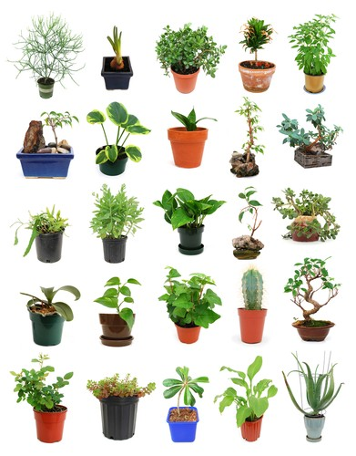 Air Purifying Plants For Bedroom: Easy Breezy Air Purifying Plants